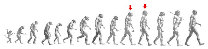 PrimatesLong arrows